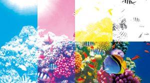 Color01.fr : impression numérique